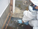 アスファルト陥没部のゴキブリ対策