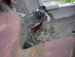 ミラクンGXによる屋根裏施工後クロゴキブリ出現