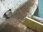 廃水処理施設でユスリカ大発生