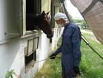 忌避剤による馬を守る対策