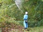 緑地山地の樹木殺虫