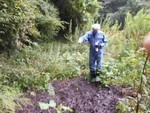 汚泥部分の土壌昆虫対策