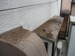 コウモリ庇換気扇上糞被害