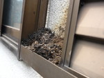 コウモリ雨戸糞被害