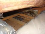 天井裏コウモリの糞