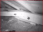 暗視カメラにより天井裏に潜むコウモリ