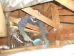 屋根裏の清掃1