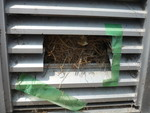 ダクト内の鳥の巣除去