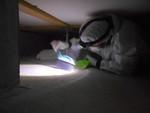 床下のクマネズミ糞清掃