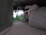 クマネズミ糞清掃後の床下の殺菌消臭