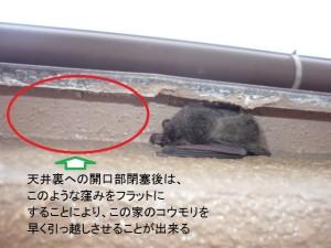 03コウモリ対策工事手順⑤