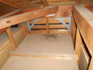 屋根裏コウモリ糞溜まり2