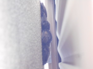 ナイトルースト雨戸にコウモリ3