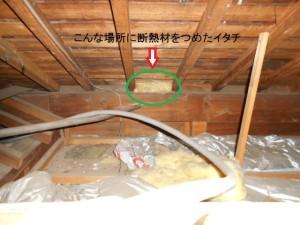 屋根裏のイタチの仕業