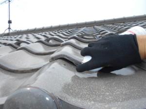 大屋根でのコウモリ追い出し施工2