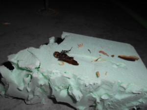 床下のゴキブリ2