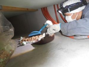 床下清掃の様子4