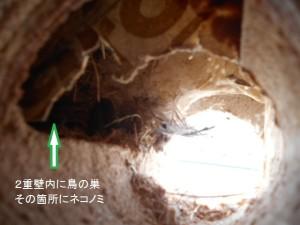 2重壁内にネコノミ