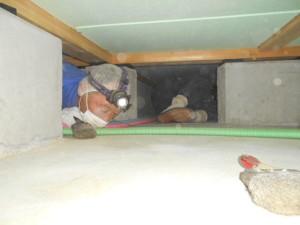 床下清掃の様子6