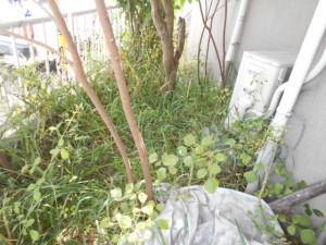 Y区草刈り前2