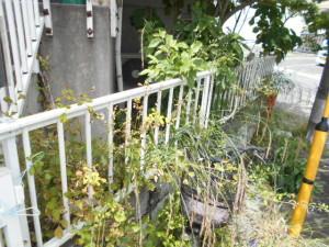 Y区草刈り前3