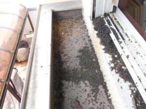 コウモリの糞清掃前1