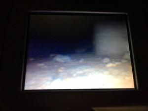 台所収納奥のノミバエ徘徊調査4