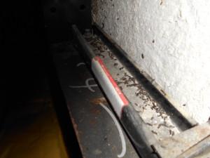 屋根裏鉄骨部のコウモリの糞2