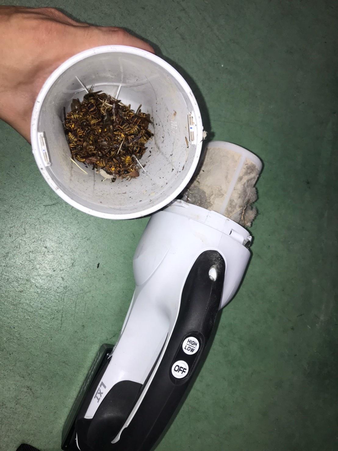 東近江市スズメバチ駆除、キイロスズメバチを掃除機で吸ってみた