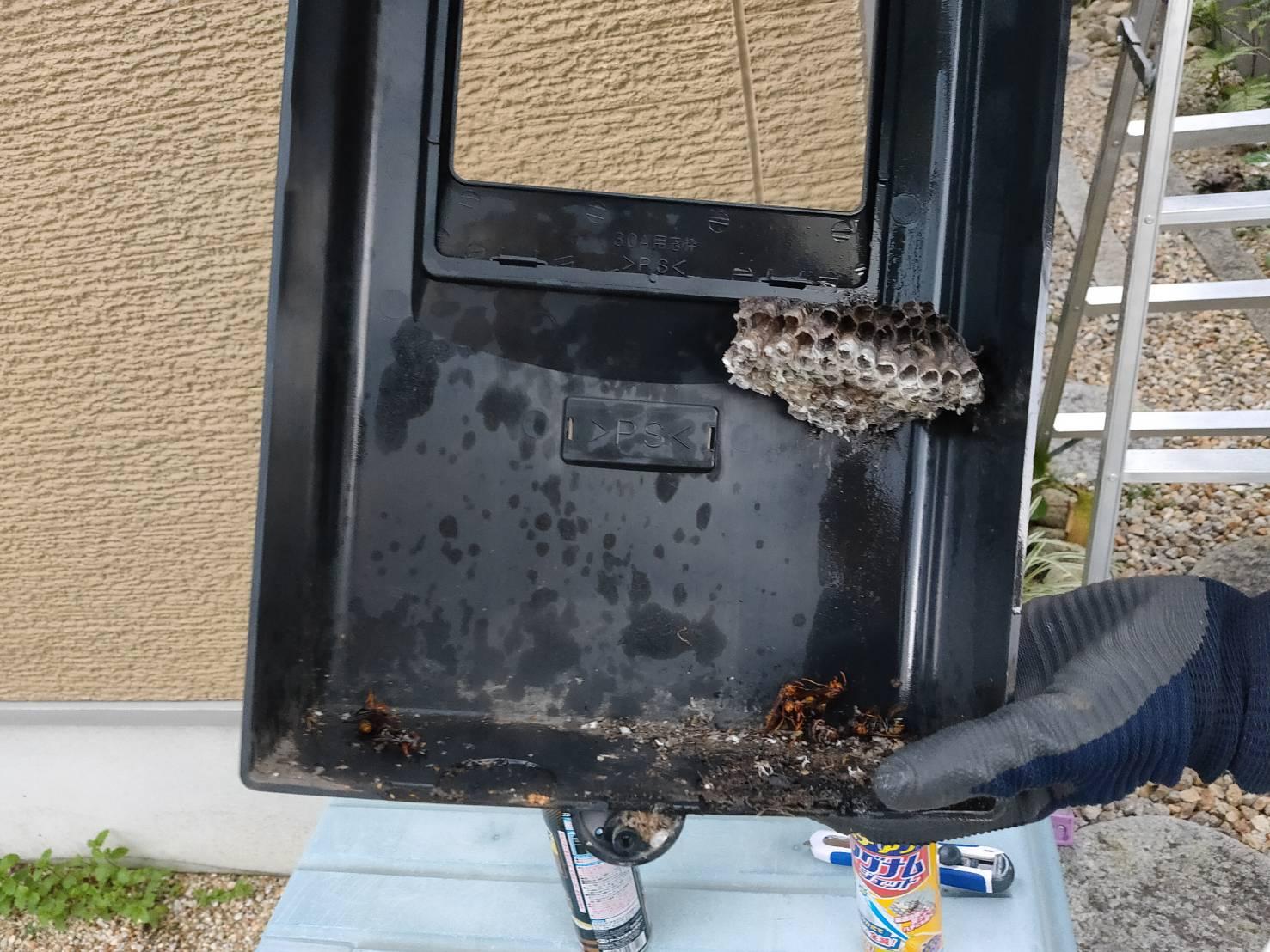 大津市ハチ駆除、分電盤内のフタにアシナガバチの巣