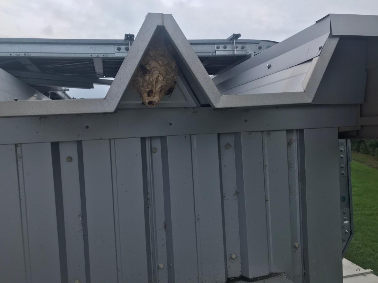滋賀県折半屋根のスズメバチ駆除